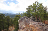 """Black Hills Pine Resume-""""Will Grow Anywhere"""" by Nikoneer, photography->landscape gallery"""