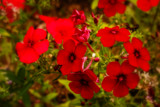 These Are Red by Eubeen, photography->flowers gallery