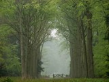 Forest near 's-Gravenland - Holland by rjh, Photography->Landscape gallery