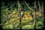 Dueling Woodpeckers by Eubeen, photography->birds gallery