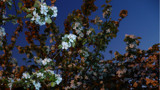 Twighlight Blossom by artytoit, photography->flowers gallery