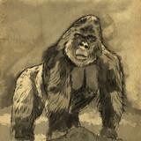 Gorilla Art by bfrank, illustrations gallery
