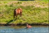Refreshing Bath by corngrowth, photography->animals gallery