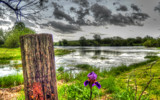 Iris Post by 0930_23, photography->landscape gallery
