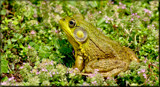 Kiss And Tell by tigger3, photography->reptiles/amphibians gallery
