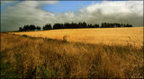 Golden Field by LynEve, photography->landscape gallery