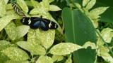 Butterfly World 1 by artytoit, photography->butterflies gallery