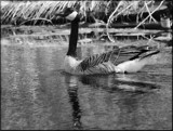 Water Float by tigger3, contests->b/w challenge gallery