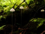 Trail Lamps by mayne, Photography->Mushrooms gallery