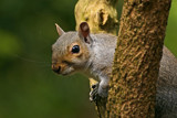Peek-a-Boo by biffobear, photography->animals gallery