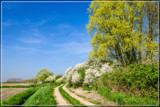 Rural Spring 2 by corngrowth, photography->landscape gallery