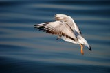 Wings of the seagull by elektronist, photography->birds gallery