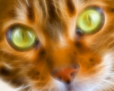 Up close and Purrsonal by artytoit, abstract gallery
