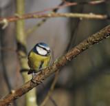 Last one by biffobear, photography->birds gallery