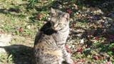 Tabby Tiger by HylianPrincess1985, photography->pets gallery