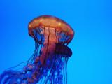 Duet by wheedance, Photography->Underwater gallery