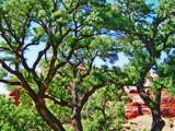 Roadside Tree by billyoneshot, Photography->Landscape gallery