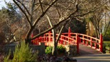 Winter In The Park - The Chinese Bridge by LynEve, photography->bridges gallery