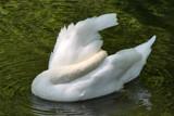 shy by jeenie11, Photography->Birds gallery