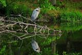 Mirror, Mirror... by SatCom, Photography->Birds gallery