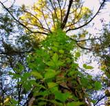 Reaching up by GomekFlorida, photography->nature gallery