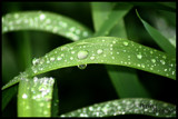 Morning Dew by SarasEdits, photography->nature gallery