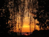 Willowy Sunset by imbusion, Photography->Sunset/Rise gallery