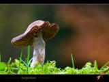Gargantuan by kodo34, Photography->Mushrooms gallery