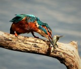 Ooyah ! by biffobear, photography->birds gallery