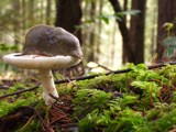 Slug-stool??? by chrblr, Photography->Mushrooms gallery