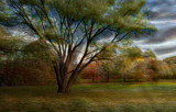 The Tree Upfront by casechaser, photography->manipulation gallery