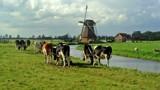Typical Dutch Landscape by rozem061, photography->landscape gallery