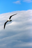 Birdie by kentare, Photography->Birds gallery