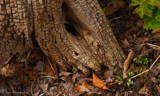 Tree Characterization by tigger3, photography->nature gallery