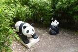 Precious Pandas by LynEve, photography->gardens gallery