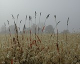 Foggy Field by jojomercury, Photography->Landscape gallery