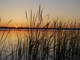 Summer's Eve, through the reeds (Part II) by ckranz2385, photography->sunset/rise gallery