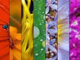 Macro rainbow by Samatar, Photography->Macro gallery