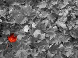 the naked leaf... by Finess, Photography->Manipulation gallery