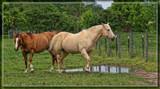 Barnyard Horses by Jimbobedsel, photography->animals gallery