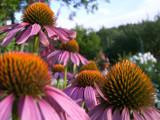 spiky by Leafarik, Photography->Flowers gallery