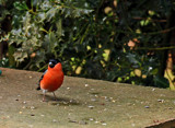Bully by biffobear, photography->birds gallery