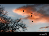 Freebirds by JQ, Photography->Sunset/Rise gallery