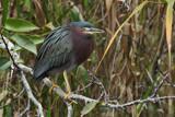 kyow - raah-rahh - whoom-whoom-whoom! by Paul_Gerritsen, Photography->Birds gallery