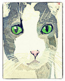 A Cat by bfrank, illustrations gallery