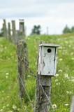 Birdhouse on a Wire by richwn, Photography->Architecture gallery