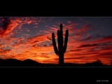Saguaro Cactus Sunset by Delusionist, Photography->Sunset/Rise gallery