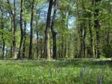 Green carpet of flowers by ekowalska, photography->landscape gallery