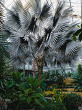 Silver Palm by Pistos, photography->gardens gallery