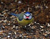 Gissa kiss then by biffobear, photography->birds gallery